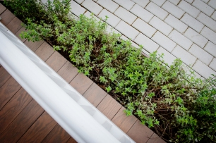 Coyote Mint and Permeable Brick Walkway